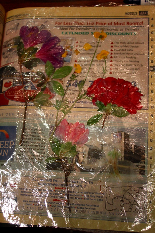 Colorful how to press flowers in a book wax paper sketch images how to press flowers in a book wax paper image collections flower mightylinksfo