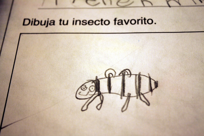 "An early indication of progress in our Spanish learning... my 5-year old read this sentence on her worksheet and volunteered ""Mom, I know what this says!  'Draw your favorite insect!'"""