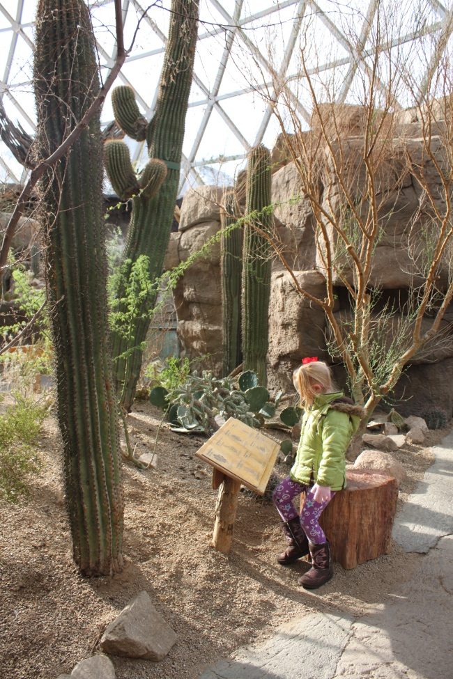 The realistic landscaping inside the desert dome.