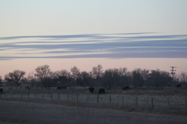 2013-12-16-nebraska-sunset2-cows