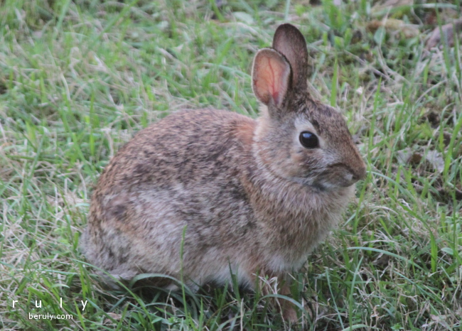 2015-04-26-rabbit-IMG_5843