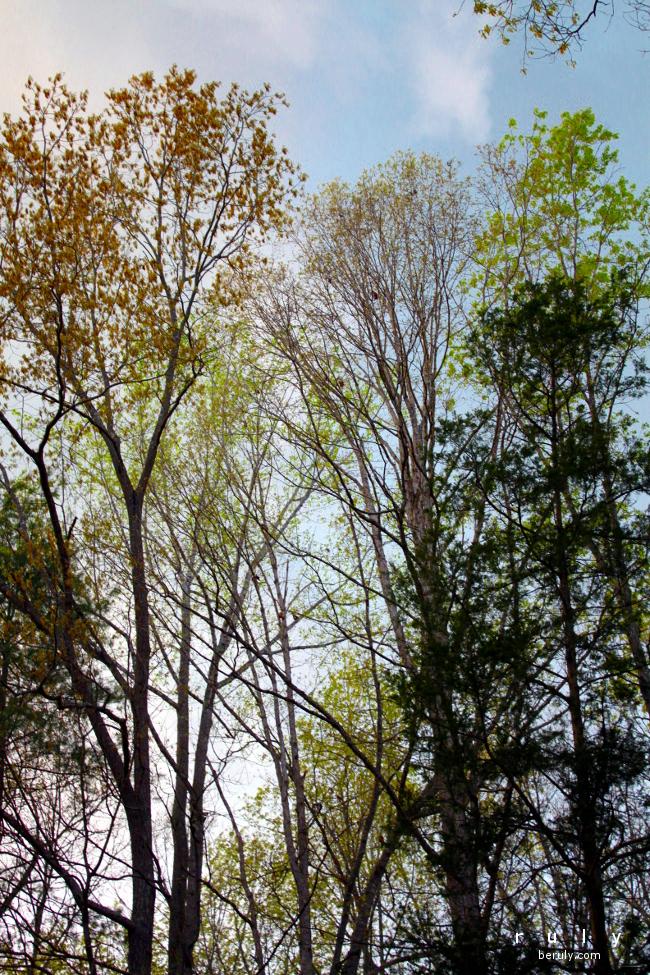 The leaves return.