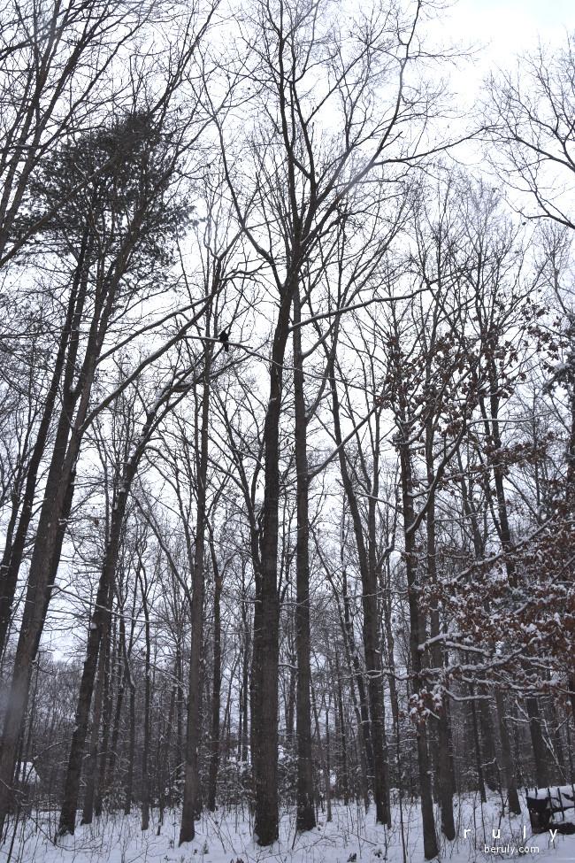 2016-02-15-snow-trees-DSC_0829